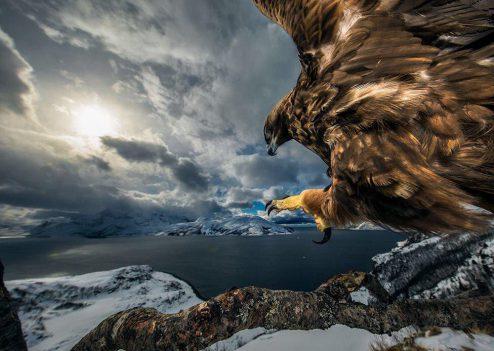 سرزمین عقاب ها