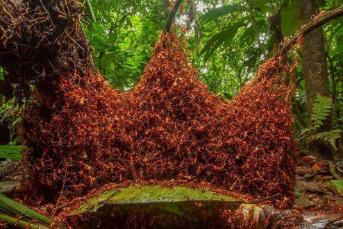 سازه نظامی مورچهها